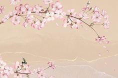 Pink Cherry Blossom Flower Branch Bouquet Border On Nude Peach Background