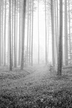 Printler Not Found Forest Trail, My Portfolio, Photo Art, Printer, Photograph, Autumn, Black And White, Landscape, Photography