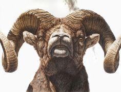 Resultado de imagen para tatuaje carnero