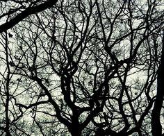 Winter Wood, Essex