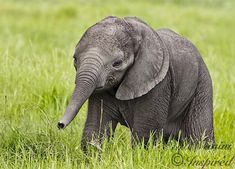 Cute Baby Elephant Pictures-AmO Images-AmO Images