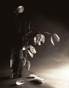 Dying-Tulips.jpg (316×400)