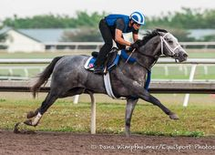 Shadwell Stable's undefeated multiple Grade 2 winner Mohaymen completed his final major preparations for the $1 million Xpressbet.com Florida Derby (G1) April 2 at Gulfstream Park with a half-mile breeze Thursday morning. Ranked as the country's leading Triple Crown contender, the 3-year-old Tapit colt was clocked in 48.95 seconds over the main track at Palm …