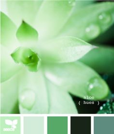 Aloe Hues