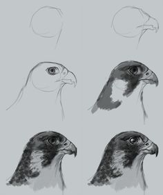 how-to-draw-falcon.jpg (700×840)