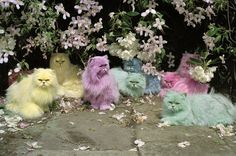 Tim Walker: a very different fashion photographer - in pictures. Pastel cats Eglingham Hall, Northumberland, England, 2000 Photograph: ©Tim Walker, Dreamscapes at The Bowes Museum Crazy Cat Lady, Crazy Cats, Weird Cats, Funny Cats, Funny Animals, Adorable Animals, Funny Lizards, Easter Cats, Happy Easter