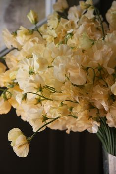 sweet pea Misty orange  Got to remember to plant sweet peas again