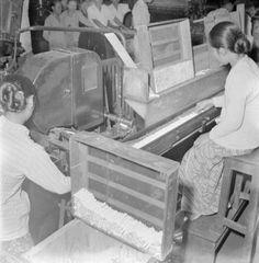 Vrouwen aan het werk in de sigarettenfabriek Faroka te Malang, Indonesië (1947)