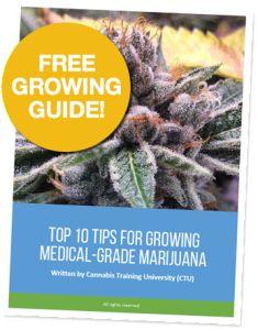 Top 10 Tips for Growing Medical Grade Marijuana. How to grow weed. How to grow cannabis. How to grow pot.