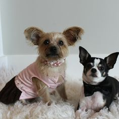 Rocky and Maggie all dressed up!