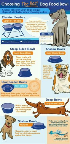 How to choose the perfect dog food bowl for your dog. West Highland Terrier, Dog Care Tips, Pet Care, Pet Tips, Best Dog Food, Best Dogs, Game Mode, Tallest Dog, Choosing A Dog