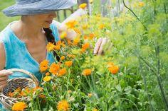 5 biljaka koje morate imati u bašti ako želite prirodnu apoteku - Lisa - Sve što čini moj život!
