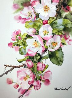 Tu recepcja - Watercolors by Kitipong Maksin, an artist from. Watercolour Painting, Watercolor Flowers, Painting & Drawing, Watercolors, Botanical Art, Botanical Illustration, Flower Art, Art Drawings, Art Projects