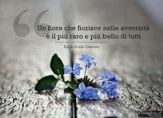 #fiore #aforismi