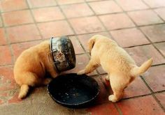 Aww cuteness overload