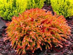 Backyard, Patio, Front Yard Landscaping, Go Green, Garden Paths, Evergreen, Perennials, Home And Garden, Landscape