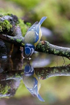 Pretty Birds, Love Birds, Beautiful Birds, Animals Beautiful, Hello Beautiful, Beautiful Things, Nature Animals, Animals And Pets, Cute Animals