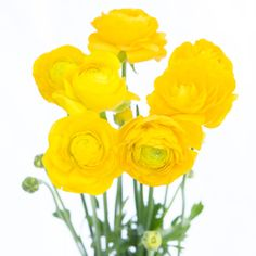 FiftyFlowers.com - Yellow Ranunculus Flower September to May 15th Delivery