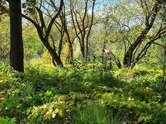 The beginning of summer is always so fascinating. #iphonephotography #naturephotography #summer #park #jungle #summerhasbegun #meilahdenarboretum #helsinki #myhelsinki #finlandinmay #beautifulplacesinhelsinki #naturelovers  #green #plants #trees #ihanapuisto #parklikeadream Iphone Photography, Nature Photography, Green Plants, Helsinki, Beautiful Places, Trees, Country Roads, Park, Summer