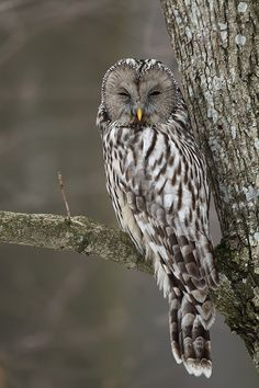 """Owls like """"who you looking at, tryin to scare me, well guess what, the only thing scary about you is your face."""""""
