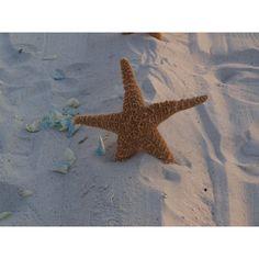 "Bulk Jumbo Sugar Starfish 10""-12"" (30) Beach Wedding And Coastal Home... (2.393.100 IDR) ❤ liked on Polyvore featuring home, home decor, orange home decor, seashell home decor, orange home accessories and coastal home decor"