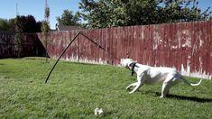 outdoor dog toys,dog toys interactive,smart dog toys,dog toys for chewers Smart Dog Toys, Best Dog Toys, Big Dogs, Large Dogs, Outdoor Dog Toys, Kong Dog Toys, Pet Toys, Dog Grooming Tips, Interactive Dog Toys