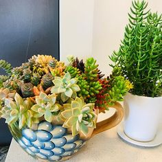 Giant succulent teacup is back! Just finished replanting this pot with new plants from our garden for a lovely lady.Crassula tetragona in a white pot looks nice too. Replant, Bird Cage, Teacup, Eco Friendly, How To Look Better, Succulents, Photoshop, It Is Finished, House Design