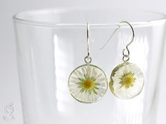 Daisy – tender blossom-earrings with real white-yellow daisy in resin and fish-hooks made of 925 sterling silver