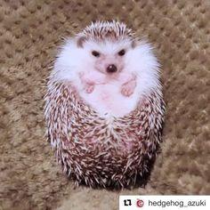 """1,344 mentions J'aime, 78 commentaires - Reem KHERICI (@reemkherici) sur Instagram: """"Moi face à une cuillère de Nutella et vous c est quoi ?"""""""