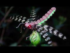 Adult drafonfly - realistic imitation fly tying instructions by Ruben Martin - YouTube