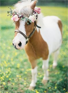 floral wreath for horse - Google Search