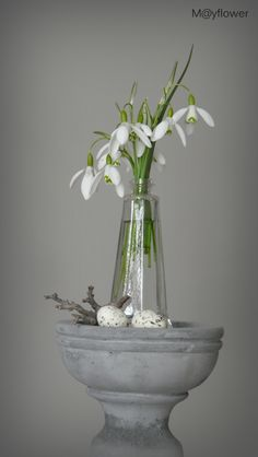 Sublime Snowdrops for Easter