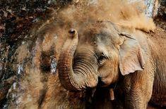 Hvor mye veier et elefant-hjerte? Hvorfor kan ikke elefanten hoppe? Og stemmer det at elefanter kan gråte? Få svarene her.