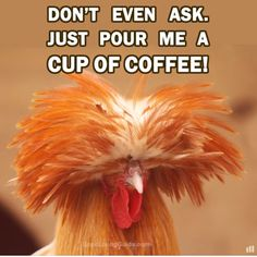 Definitely...coffee and quick!!!
