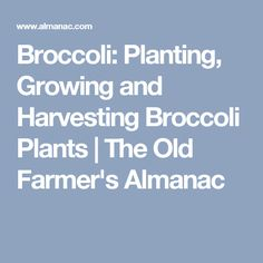 Broccoli: Planting, Growing and Harvesting Broccoli Plants | The Old Farmer's Almanac