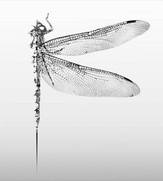 Dragonfly Tatoos, Dragonfly Art, Bee Images, Botanical Drawings, Nature Tattoos, First Tattoo, Gravure, Dragonflies, Cute Art