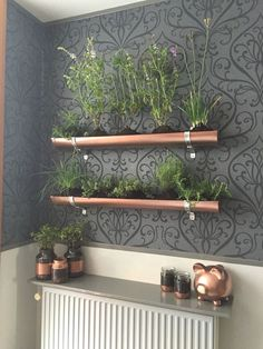 Indoor vertical herb garden Pvc gutter and copper spray paint to give it a steampunkish look Old pickle jars and spray paint equals cool planters Vertical Herb Gardens, Vertical Garden Planters, Vertical Garden Design, Herb Garden Design, Herb Gardening, Garden Ideas, Herbs Garden, Recycled Planters, Garden Boxes