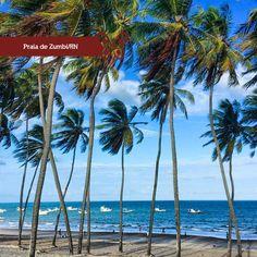 Próxima à Natal, a praia de Zumbi localizada no município Rio do Fogo no estado do Rio Grande do Norte, é muito bonita com barracas e vários coqueiros em sua orla. Perfeita para quem procura sossego.