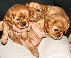 Growing fast: Honey, Curry and Bella