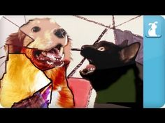 Gotye Dog Parody - Somebody That I Used To Know. there are 13 different versions if you follow the link  http://quebec.huffingtonpost.ca/2012/06/28/video-the-star-wars-that-i-used-to-know_n_1635295.html?utm_hp_ref=canada-quebec#