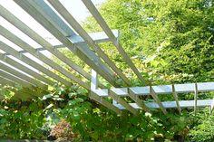 Groenplan - Diverse Tuinfoto's Garden Structures, Outdoor Structures, Pergola, Deck, Plants, Outdoor Pergola, Front Porches, Plant, Decks