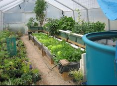 Aquaponics = organic, healthy and sustainable