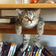 Kediler ve Kitaplar - Kimileri kedilerin sabahtan akşama kadar yatıp uyuduklarını ve miskin miskin takıldıklarını söylerken kimileri de kedilerden çok şey..