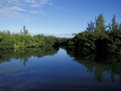 Tidal Lagoons Fringed with Mangroves, Lovers Key SRA, Ft. Meyer's Beach, Florida