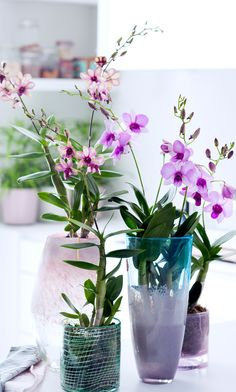 Did you know that the name Dendrobium comes from the Greek dendron (tree) and bios (life)?