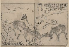 Animal - Deer - Asian - Black and white woodblock