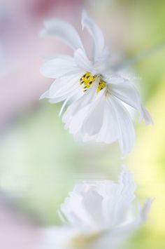 2013 best white flowers images on pinterest in 2018 beautiful love flowers flowers for you beautiful flowers mightylinksfo