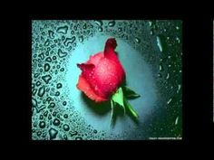 """""""Be Not Afraid"""" -- John Michael Talbot My favorite song! Makes me cry everytime! 3d Rose, Red Rose Flower, Blue Roses, Teal Flowers, Cut Flowers, Pretty Flowers, Beautiful Roses, Beautiful World, Romantic Roses"""