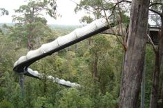 Slide through the Forest, Tasmania. things to do/see in Tasmania. Perth, Brisbane, Melbourne, Tasmania Road Trip, Tasmania Travel, Cairns, Cool Places To Visit, Places To Travel, Vacation Places