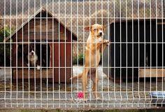 Onko koirasi sairastua masennukseen? Lue lisää blogistamme.❤️    Can your dog suffer from depression? Read more from our blog. ❤️